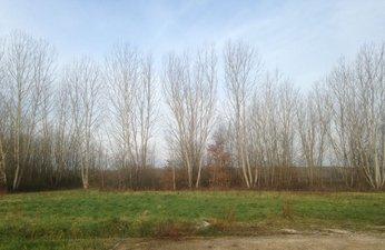 Le Clos Des Vignes - immobilier neuf Auvillars-sur-saône